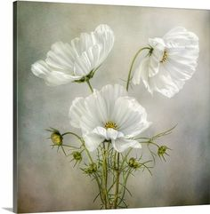 Shop for Cosmos Charm' Floral Wrapped Canvas Wall Art. Get free delivery On EVERYTHING* Overstock - Your Online Art Gallery Store! Arte Floral, Floral Wall, Fotografia Floral, White Flowers, Beautiful Flowers, Poppy Flowers, Exotic Flowers, Yellow Roses, Purple Flowers