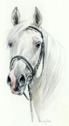 Press visit link above for more options Watercolor Horse, Watercolor Animals, Watercolor Paintings, Horse Drawings, Animal Drawings, Art Drawings, Horse Artwork, White Horses, Equine Art