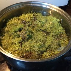 Creating Lichen Dyes ( Letharia Vulpina or Wolf Lichen) : 5 Steps (with Pictures) - Instructables