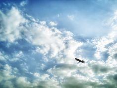 My Sky , My Freedom