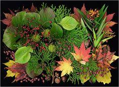 Autumn, Scanner Photography, Scanner Art, Ellen Hoverkamp - Scanner Photography By Ellen Hoverkamp