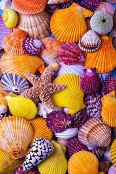 Her Sea Shells Art Print