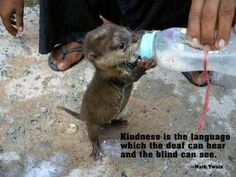 Awww what a wonderful act of kindness this is! ❤️❤️❤️❤️