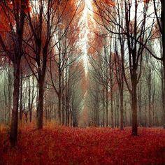 Stunning Fall Beauty