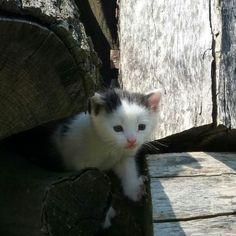 #maciatko #maciatka #macicka #macicky #macky #kote #kotata #kocicka #kocicky #drevo #blackandwhite #blackandwhitecat #blackandwhitekitten #blackandwhitekittens #blackandwhitekitty #kitten #kittens #kitty #cats #catlovers #ilovecats #ilovecats🐱 #ilovecatssomuch #cute #cutie #cuties #cuteness Black And White Kittens, Kitty Cats, I Love Cats, Cat Lovers, Nature, Cute, Animals, Instagram, Kittens