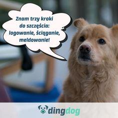 A Ty znasz trzy kroki do szczęścia swojego psa? #DingDog #dog #pies Dogs, Animals, Instagram, Animales, Animaux, Pet Dogs, Doggies, Animal, Animais