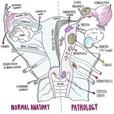 The Larynx – Blood and Nerve Provide – free medical books Nursing School Tips, Nursing Notes, Ob Nursing, Nursing Schools, Medical Students, Nursing Students, Human Body Anatomy, Gross Anatomy, Medical Anatomy