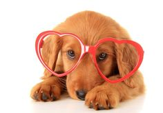 """With Valentine's Day right around the corner, here are 14 sweet ways to say, """"I woof you!"""""""
