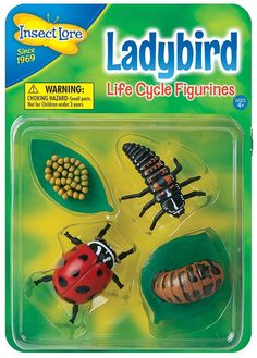 Children can see how Ladybirds change as they grow with Insect Lore's Ladybird Life Cycle Stages These oversized, anatomically correct figures have been accurately painted and sculpted to show the four stages of the Ladybird development: Eggs - L Turtle Life Cycle, Life Cycle Stages, Butterfly Life Cycle, Early Math, Science Kits, Matching Cards, Life Cycles, Insects, Bug Toys