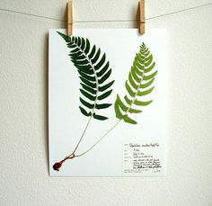Fern Botanical PRINT Original Herbarium by DayThreeCreations, $10.00