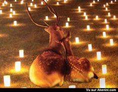 Une belle histoire d'amour A beautiful love story Deers