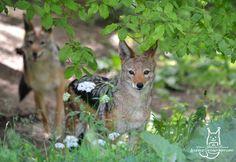 Shy pair by Allerlei on DeviantArt Pairs, Deviantart, Animals, Animales, Animaux, Animal, Animais
