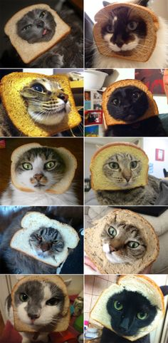 "Have a lot of cats or know some ""crazy cat lady""? Here's a great idea for Halloween - buy a loaf of bread and cut holes to apply around the kitty's face. The cats will be disguised as a loaf of bread! (Note: Do not use rye bread as you will need to pay royalties to J.D. Salinger for the Cat- cher in the Rye)."