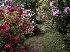 """La conca dei rododendri (1), Parco Burcina """"Felice Piacenza"""", Pollone (BI) – maggio"""