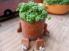 String of pearls in clay pot