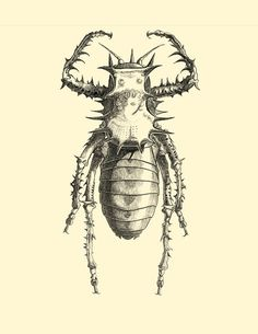 Items similar to Pen and Ink Insect from Afirca Study Limited Print on Etsy Insects, Study, Ink, Art Prints, Handmade, Studio, Hand Made, Craft, Learning