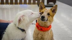 My blind dog met another blind dog last weekend and they really hit it off! - Imgur