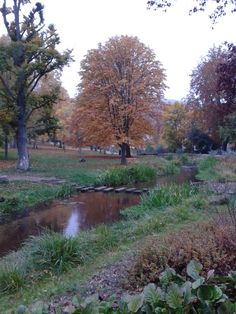 Kurpark im Herbst http://fc-foto.de/37111389