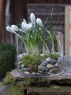 Ein großes Glasgefäß, wie es etwa für Windlichter verwendet wird, unterstreicht den besonderen Charakter der Krokusse. Die Größe so wählen, dass die Blüten knapp über den Rand reichen. Den Boden des Glases vorher mit Flusskieseln und Moos füllen. Die Krokus-Knollen werden in den Boden eingebettet und sin so unter dem Moos verborgen. (Foto: W&G/Grit K.)
