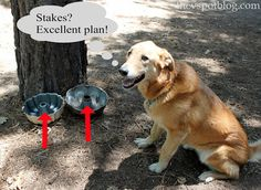 Use bundt pans with small stakes in the middle to keep the dog from spilling food and water while camping.