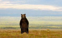 Call of nature. by Igor Shpilenok, via 500px