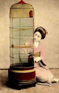 vintage geisha with wire bird cage Photos Du, Old Photos, Vintage Photos, Bird In A Cage, Bird Cages, The Caged Bird Sings, Meiji Era, Japan Art, Japan Japan