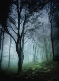 Foggy Forest Art Print by TheKnottedRaven on Etsy, $15.20