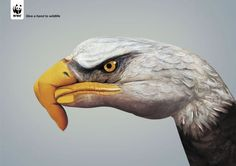 "WWF: Eagle, March 2007  -  Saatchi Simko, Geneva, Switzerland with body painter Guido Daniele who also photographed the images. ""Give a hand to wildlife."""