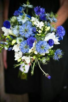 Bridesmaid's Bouquet: White Freesia, White Bouvardia, Blue Nigella, Blue Cornflower, Green Hypericum Berries