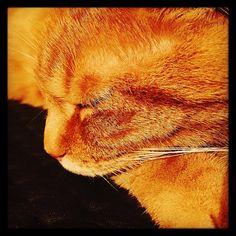 11/25 - Het was laat en Knofje lag op de bank te slapen.