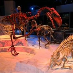The Hall of Fossils at the Florida Museum of Natural History