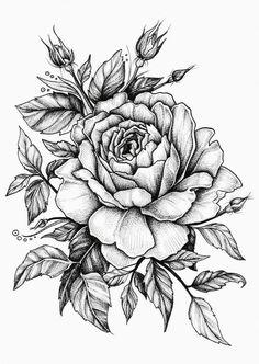 25 Beautiful Flower Drawing Information & Ideas - Zeichnungen - Tatoo Ideen Rose Drawing Tattoo, Tattoo Sketches, Tattoo Drawings, Pencil Drawings, Pencil Tattoo, Drawing Drawing, Horse Drawings, Drawing Faces, Pencil Art