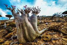 10 HD wallpapers of Socotra Island, alien world here on Earth | HD ...