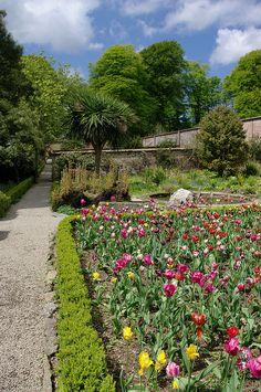 Trengwainton Garden - Cornwall, England