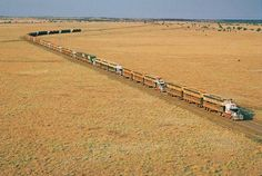 There  are 17 trucks with 3 trailers and 2 decks per trailer.  Therefore  there are 102 decks of cattle and there would be approximately 28 cattle per deck.  This totals 2,856 head of  cattle.  The cattle will weigh approximately 500kg each.