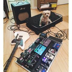"""From Instagram user @jasonmin_ who says """"This rig is dog tested, dog approved. #gear  #pedalboard"""