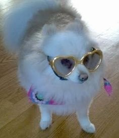 7f085df63c Gold Heart Shaped Dog Sunglasses (fits dogs up to 40 lbs) Dog Model