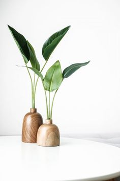 green plant on brown wooden vase photo – Free Plant Image on Unsplash