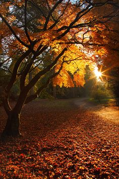 ~~Sunset in Autumn, this image was taken at Westonbirt Arboretum shortly before sunset • by Gary King Photography~~