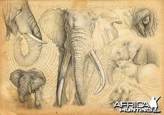 elefanti Marcello Pettineo