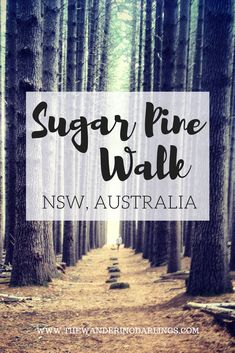 Sugar Pine Walk, NSW, Australia