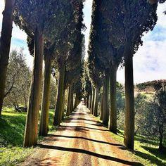 Life  In Tuscany   #wonderful #place #placetobe #instadaily #instatravel #instalovers #instavacation #instacool #instagood #instamood #instadaily #love #art #montalcino #volgotoscana #volgoitalia #igersitalia #igerssiena #igerstoscana Photo credit: @k_lonny