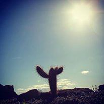 Creia, há uma fonte no deserto!