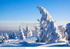 ... Trees Covered in Snow, Brocken, Harz Mountains, Saxony-Anhalt, Germany