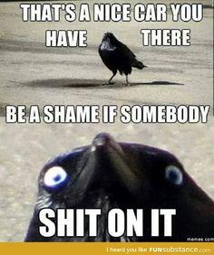 Have Some Laughs With These Fresh Animal Memes Haben Sie etwas Lachen mit diesen frischen Tier Memen Really Funny Memes, Stupid Funny Memes, Funny Relatable Memes, Haha Funny, Funny Cute, Funny Stuff, Inappropriate Memes, Funniest Memes, Funny Shit