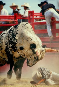 Rodeo cowboys - bull riding gone bad.