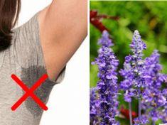 Zapomeňte na chemické antiperspiranty z obchodu: Tato bylinka Vás ochrání před pocením mnohem lépe!