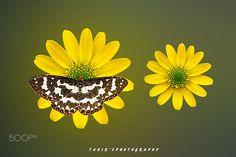 "I hope you will enjoy it.  You May Follow me  at    <a href=""https://www.facebook.com/tahirsphotography"">Facebook page</a>     <a href=""https://www.flickr.com/photos/tahirs_photography/"">Flicker </a>     <a href=""https://secure.istockphoto.com/portfolio/tahirabbas#14221adb"">ISTOCK</a> "