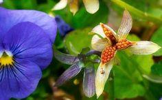 Growing Flowers – Annuals, Biennials, Perennials