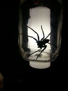 Spider anyone?
